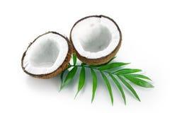 与在白色背景隔绝的绿色棕榈叶的椰子 免版税库存图片
