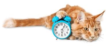 与在白色隔绝的时钟的可爱的红色猫 库存图片