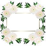 与在白色隔绝的毛茛属花的精美花卉框架 皇族释放例证