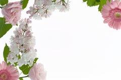 与在白色隔绝的白色和淡粉红的花的花卉框架 库存照片