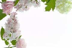 与在白色隔绝的白色和淡粉红的花的花卉框架 免版税图库摄影