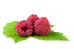 与在白色隔绝的叶子的莓 库存图片