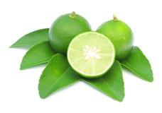 与在白色隔绝的叶子的绿色柠檬 库存图片