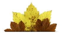 与在白色隔绝的秋天叶子的明信片 免版税库存照片