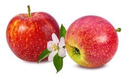 与在白色隔绝的花的苹果 库存图片