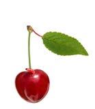 与在白色隔绝的蠕虫的甜樱桃 免版税库存照片