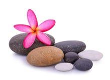 与在白色隔绝的赤素馨花花的石头 库存图片