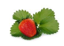 与在白色隔绝的绿色叶子的草莓 库存照片