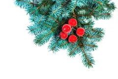 与在白色backgrou隔绝的圣诞节装饰的冷杉分支 库存图片
