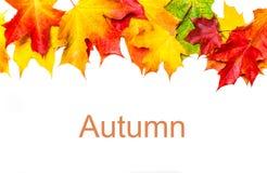 与在白色backgroun隔绝的槭树叶子的秋天构成 免版税库存照片