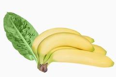 与在白色backround隔绝的叶子的香蕉 免版税库存图片