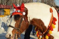 与在红色骑马兜帽穿戴的白色鬃毛的布朗马在公园站立户外,微笑,幽默 免版税库存照片
