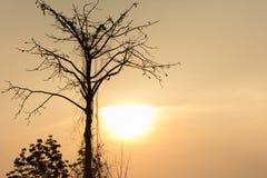 与在背景设置的太阳的剪影树 库存照片