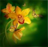 与在色的一只蝴蝶的兰花 免版税库存照片
