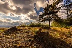 与在阳光沐浴的树的小山 库存图片