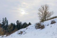 与在雪包括的结构树的平静的冬天横向 库存图片