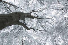 与在雪盖的树的冬天场面 库存图片