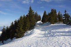 与在Postavaru山, Poiana布拉索夫手段的大雪盖的冷杉木森林的冬天风景 免版税库存图片