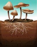 与地下根的新鲜的蘑菇 向量例证