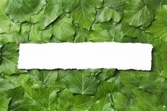 与地方的白皮书框架文本的热带背景的 叶子自然布局  免版税库存图片
