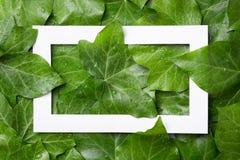与地方的白皮书框架文本的热带背景的 叶子自然布局  免版税图库摄影