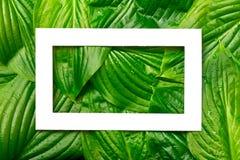 与地方的白皮书框架文本的热带背景的 自然布局由叶子制成 图库摄影
