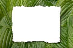 与地方的白皮书框架文本的热带背景的 自然布局由叶子制成 免版税图库摄影