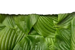 与地方的白皮书框架文本的热带背景的 自然布局由叶子制成 库存图片