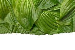 与地方的白皮书框架文本的热带背景的 自然布局由叶子制成 库存照片