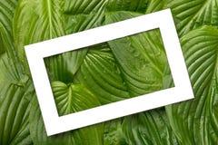 与地方的白皮书框架文本的热带背景的 自然布局由叶子制成 免版税库存照片