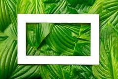 与地方的白皮书框架文本的热带背景的 Na 免版税库存图片