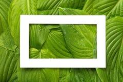 与地方的白皮书框架文本的热带背景的 Na 库存图片