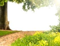 与地方的美好的绿色自然拷贝的。 图库摄影