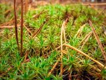 与地毯的异常的苔绿色针 库存照片