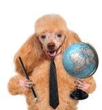 与地球的狗 免版税图库摄影