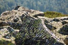 与地衣的一块石头在山 库存照片