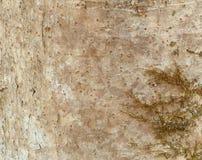 与地衣的树皮背景 免版税图库摄影