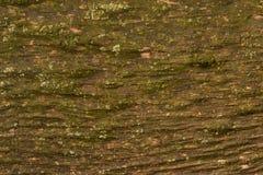 与地衣的老木头 免版税库存图片