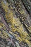 与地衣背景纹理/自然摘要的岩石/峭壁。 库存照片