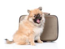 与坐在葡萄酒手提箱附近的开放嘴的波美丝毛狗小狗 查出在白色 库存图片