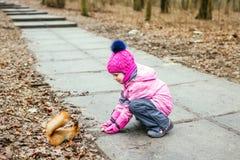与坚果的小女孩哺养的灰鼠在森林里 免版税库存图片