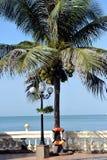 与坚果的椰子树在越南 免版税库存照片