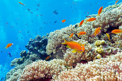 与坚硬珊瑚和异乎寻常的鱼的珊瑚礁在热带海 免版税图库摄影
