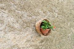 与垂悬从墙壁的花的篮子 库存图片