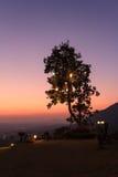 与垂悬的光的剪影树  库存照片