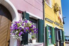 与垂悬的美丽的窗口在Burano海岛(威尼斯,意大利)开花 图库摄影