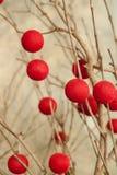 与垂悬红色串球的光秃的树枝 库存照片