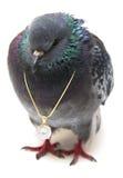 与垂饰的鸽子在链子 免版税库存图片
