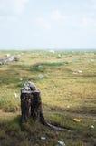 与垃圾自然恶习的切好的树 库存照片