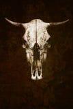 与垫铁的公牛 战利品大有角的动物特写镜头 库存照片